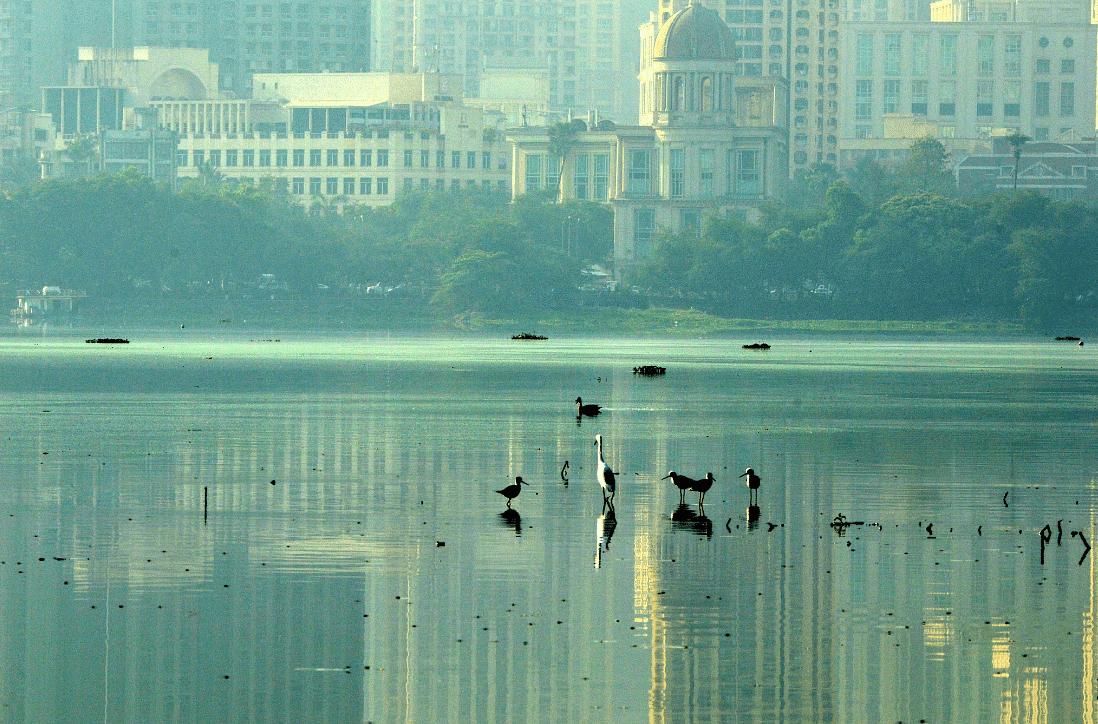 Mumbai's Powai lake. (Photo courtesy: Twitter)