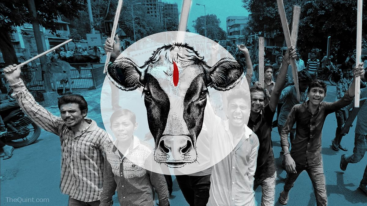 The mob violence unleashed by self-declared cow vigilante groups in the country has come under the judicial scanner. (Photo: <b>The Quint</b>)