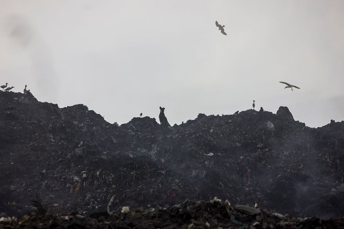 Standing in attention atop a hill made of garbage. (Photo: Abhilash Mallick/<b>The Quint</b>)