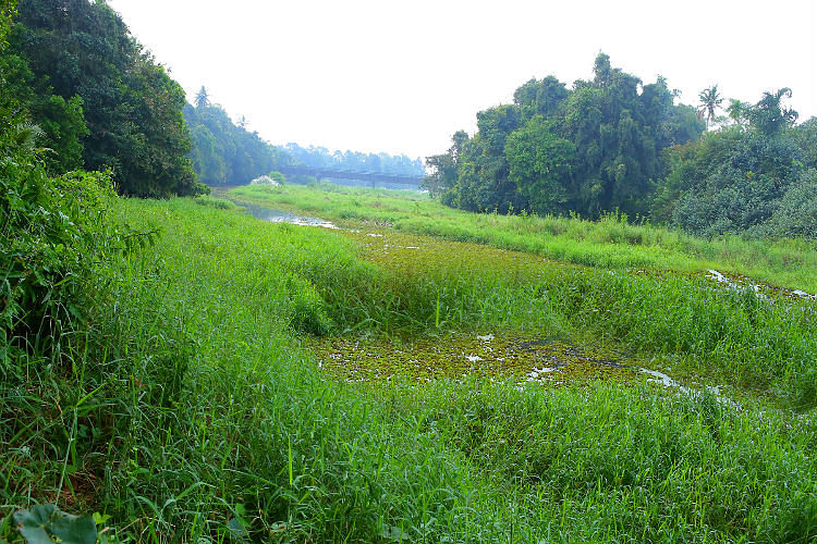 River before cleaning. (Photo: The News Minute)