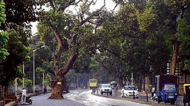 Nearly 30,000 Bengaluru citizens objected to the cutting of trees for road widening purposes. (Photo Courtesy: The News Minute)