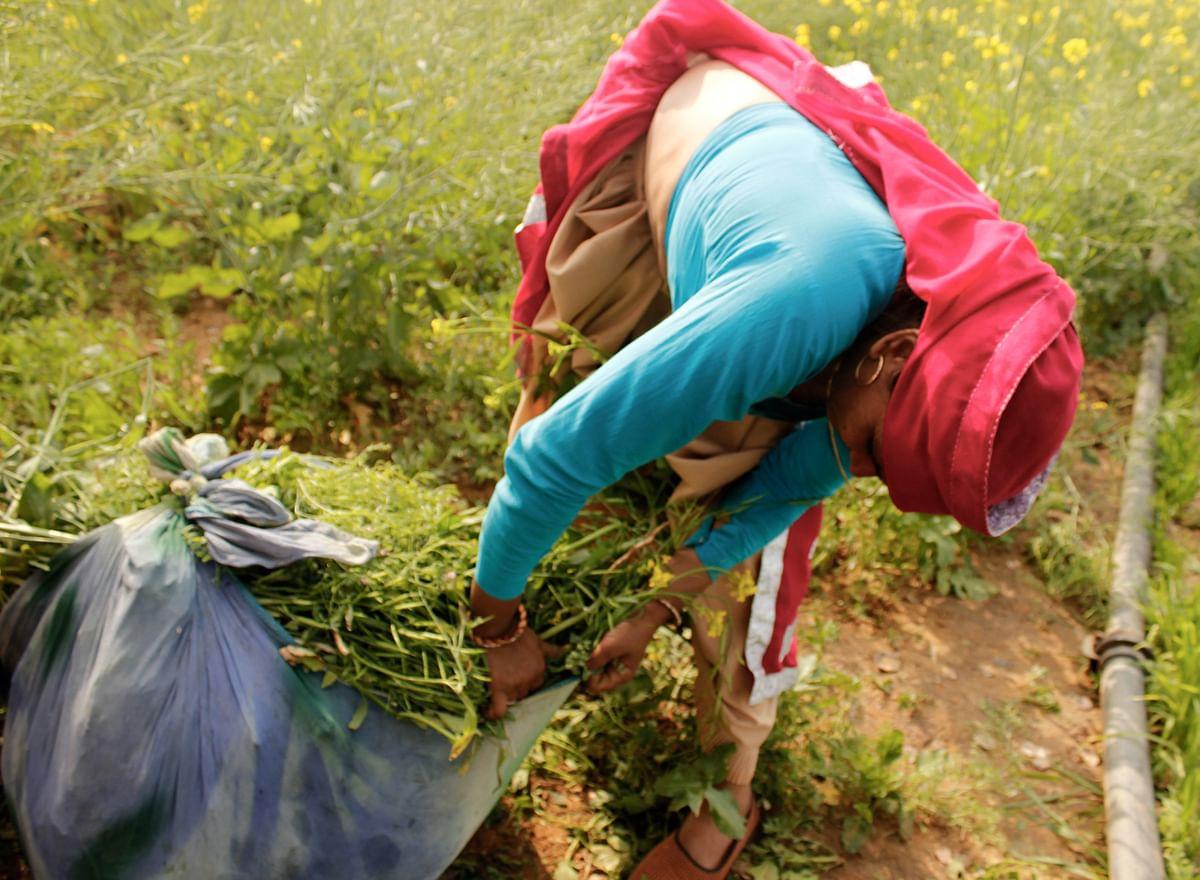 Kavita working on her farm. (Photo: Kashish Badar)