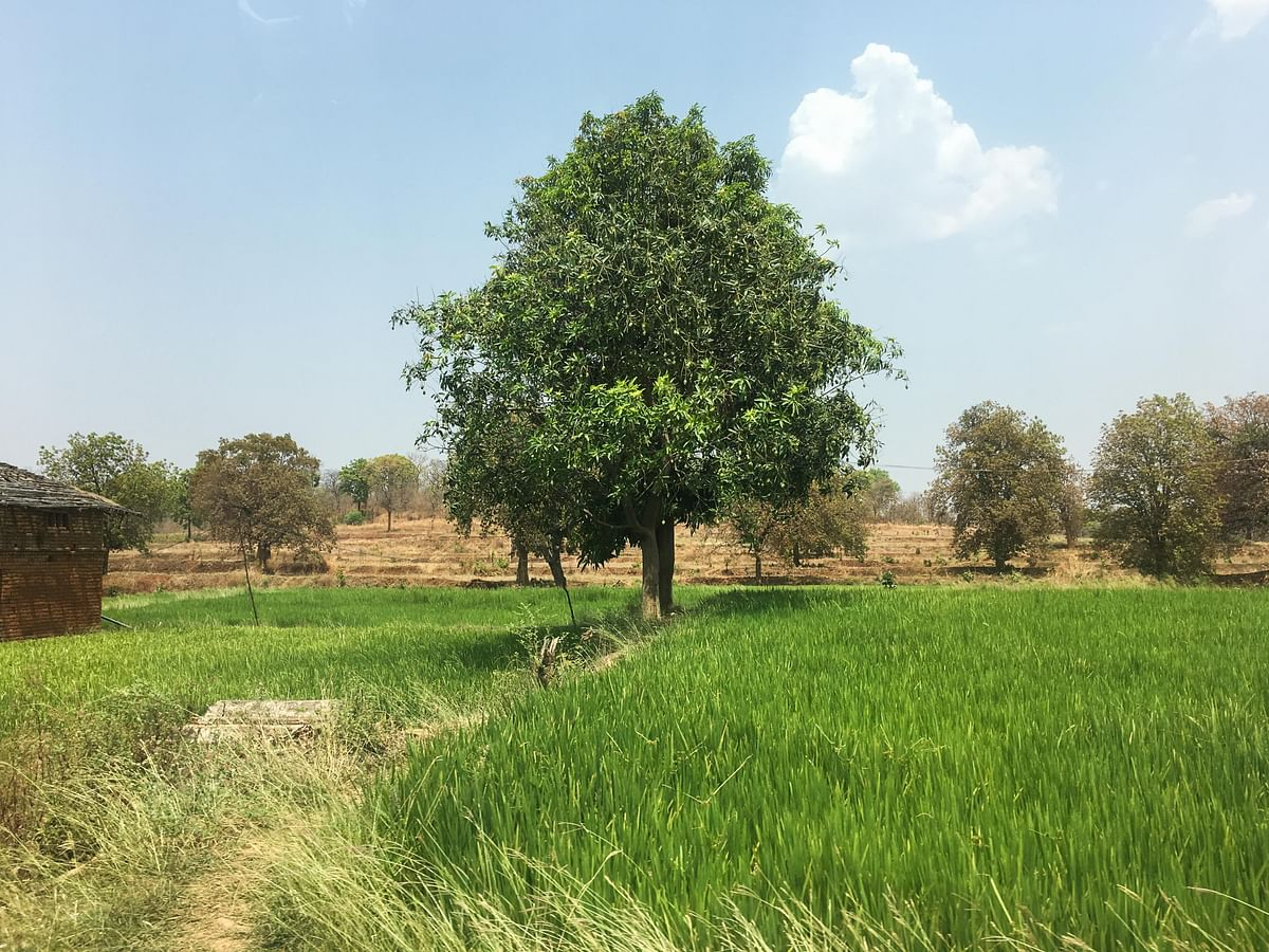 A field in Sonakhan village. (Photo: Thomson Reuters Foundation/Rina Chandran)