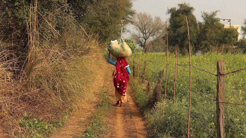 Kavita Yadav carries 30-35 kg of fodder on her back from her farm alone. (Photo: Kashish Badar)