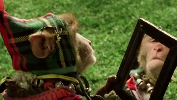 The film stars the wokest monkey of all time. (Photo Courtesy: YouTube Screengrab)