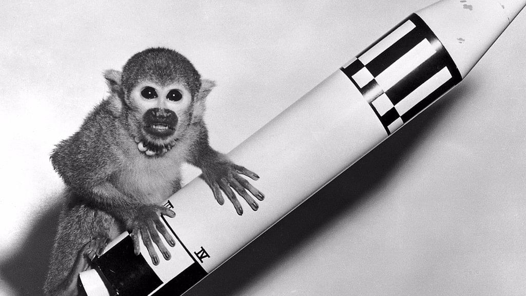 Able and Miss Baker: Remembering NASA's Beloved Space Monkeys