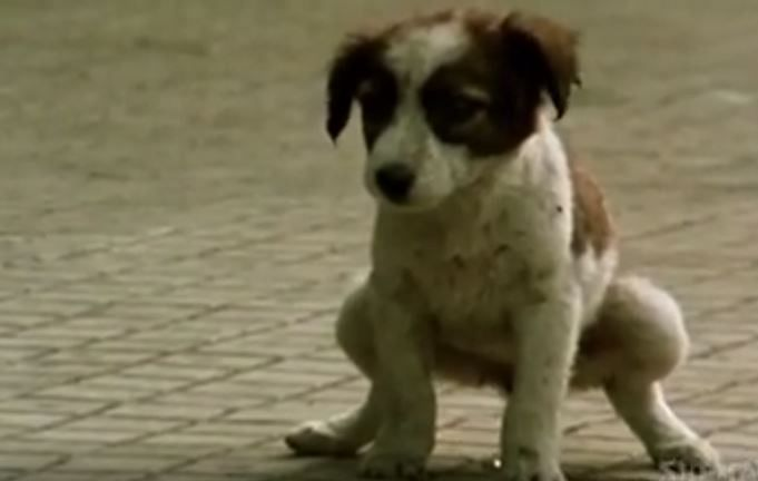 Any movie that opens with a cute pup is a good movie in my books. One minute in, that too. Way to set the bar high, Kundan Shah. (Photo Courtesy: YouTube Screengrab)