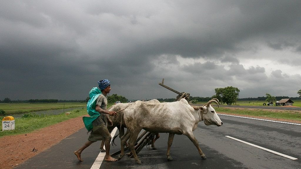 Cattle markets across the country have reported massive losses even before the new laws have taken effect. (Photo: Reuters)