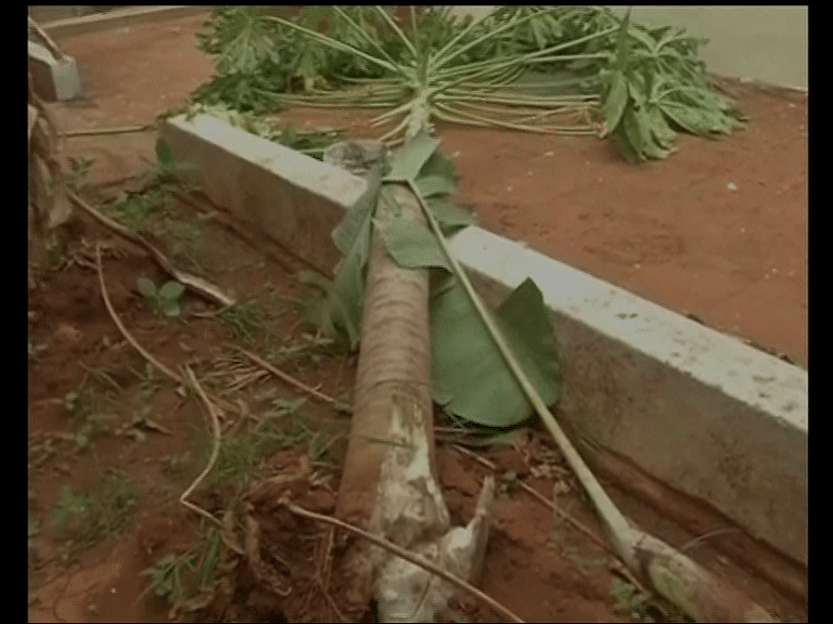 Uprooted tree in a residence compound (Photo: ANI screen grab)