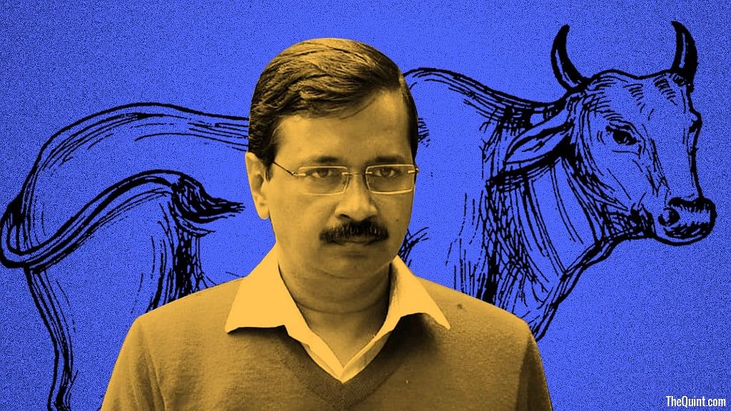 Petitioner Gaurav Jain pens a letter to Delhi Chief Minister Arvind Kejriwal questioning his stand on the beef ban. (Photo: <b>The Quint</b>)