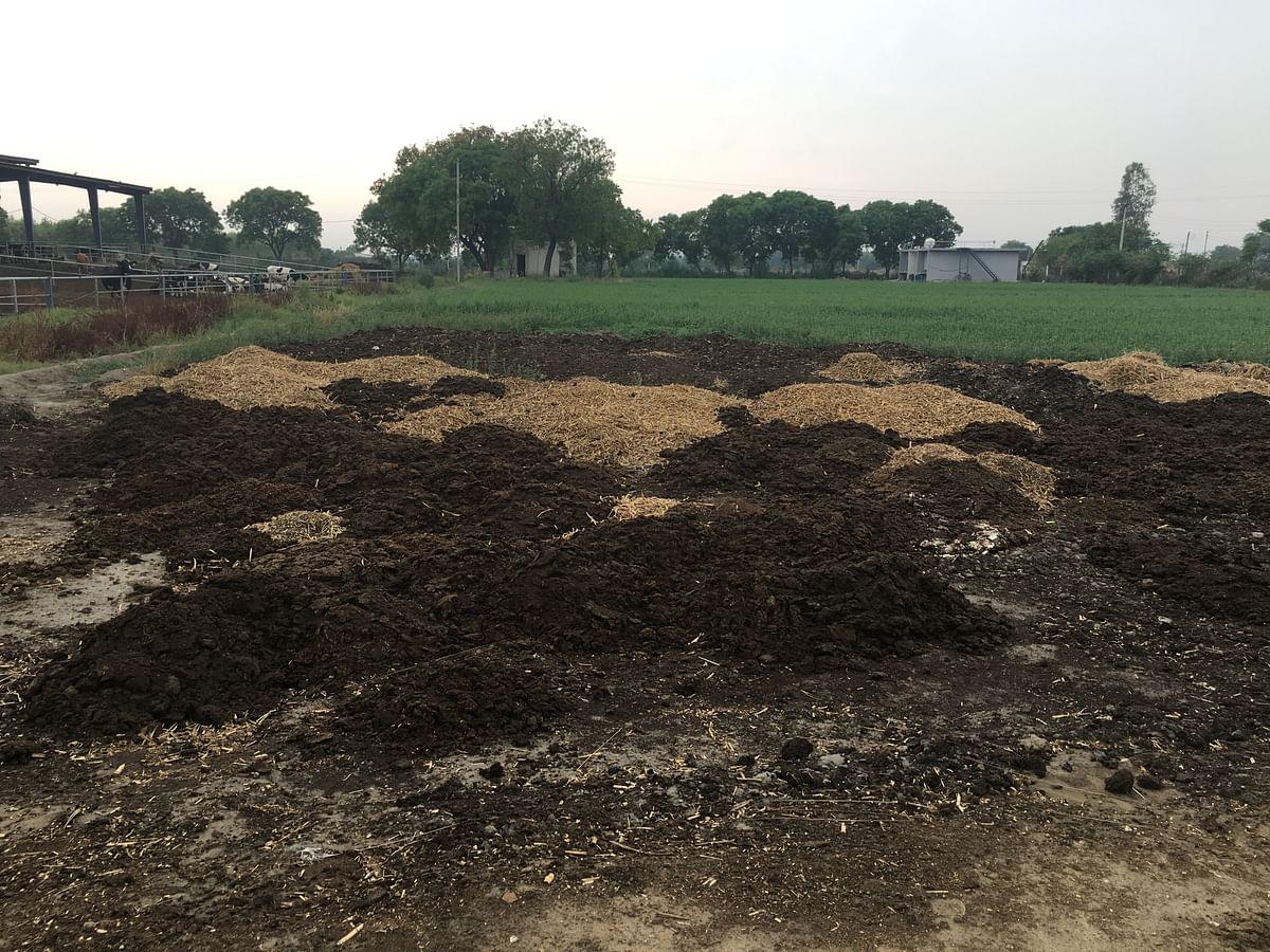 Conversion of farm land into organic is a slow and gradual process. (Photo: Shiv Kumar Maurya/<b>The Quint</b>)
