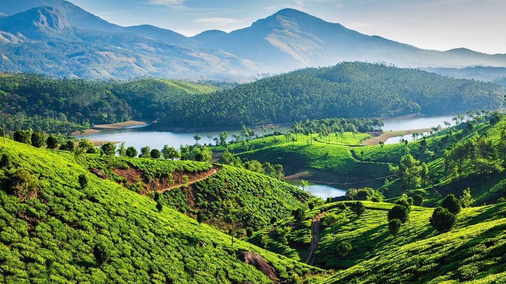Tea plantations and river in hills in Munnar.
