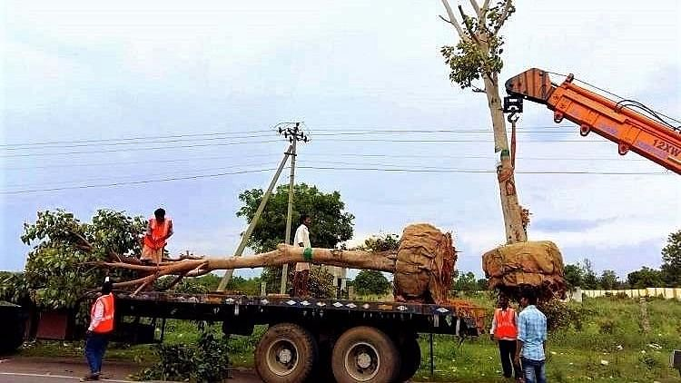 #GoodNews: Village Near Hyd Gives Home To 100 Trees Facing Axe