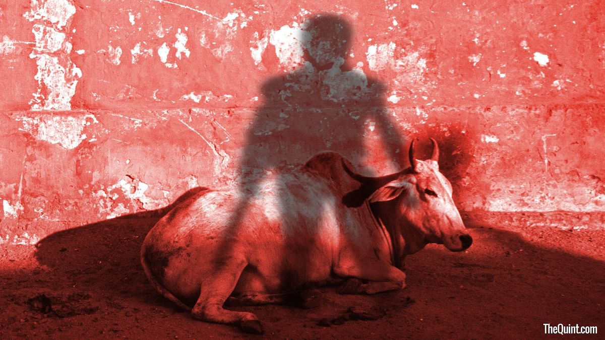 In 2006, the West Bengal government had declared that 50 to 60 lakh cattle were being smuggled to Bangladesh. (Photo: Harsh Sahani/ <b>The Quint</b>)