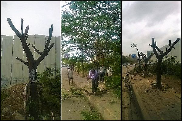 Translocation of trees involves pruning of trees and replanting them at a different location. (Photo: The News Minute)
