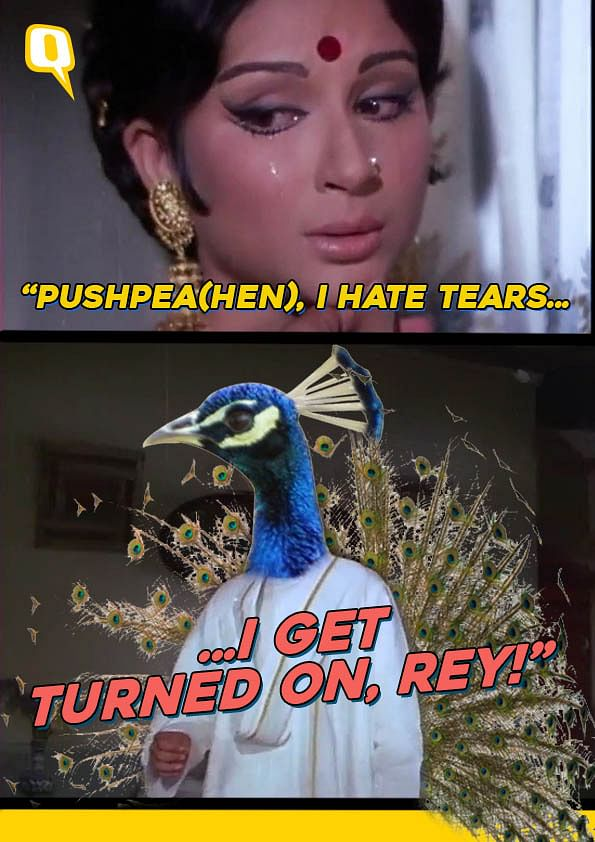 Ye Dil Maange 'Mor' Memes? Then Check Out These Funny Peacock Puns