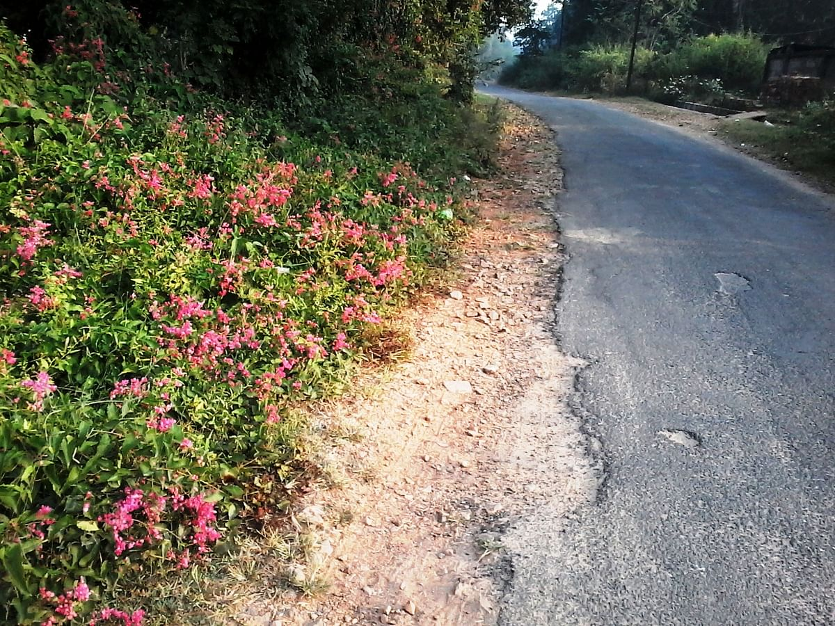 The old road with wild flowers growing. (Photo Courtesy: Lesley D Biswas)