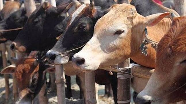 The Uttar Pradesh government has told officials to barcode abandoned animals and set up temporary cow shelters at unused government buildings.