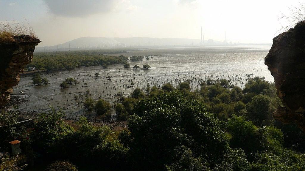 Mangroves in Mumbai.