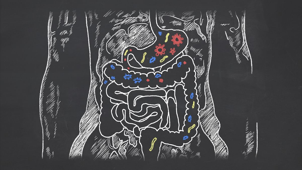 Our gut is quite rightly called the 'second brain'!
