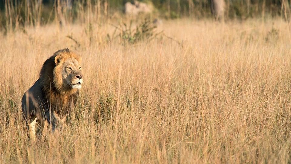Xanda, the son of Cecil who was hunted by a dentist from the US.