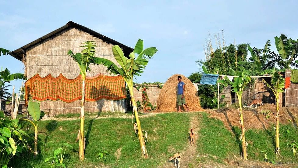 Houses on raised ground help char villagers stay safe during floods with banana trees and vegetable gardens preventing soil erosion.