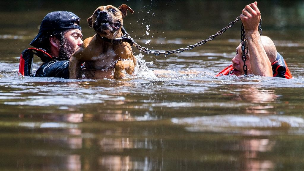 Saving a chained dog.