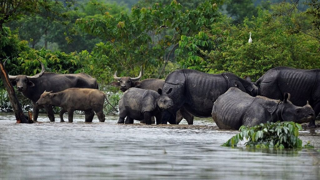 Floods are an annual threat to the lives of animals in Kaziranga National Park. But that's also what sustains the ecosystem.