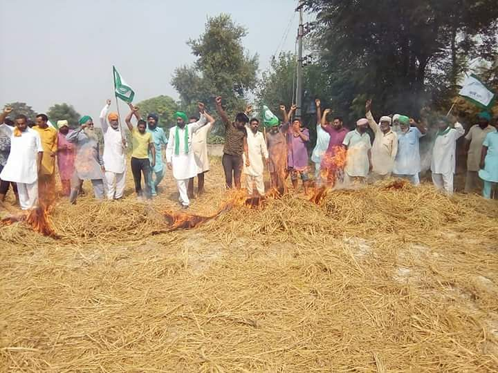 Farmers pose defiantly in a field where paddy stubble has been burnt despite a ban at Dhirpur village in Kapurthala district, Punjab.