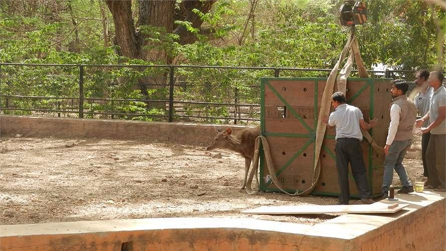 Authorities of Mysuru Zoo have decided to overhaul safety measures for visitors.