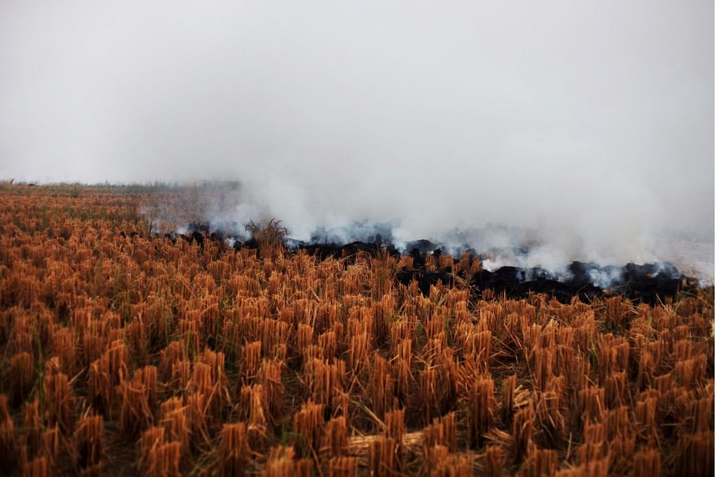 Smoke from the paddy fields contribute to the rising levels of air pollution that engulfs the national capital.