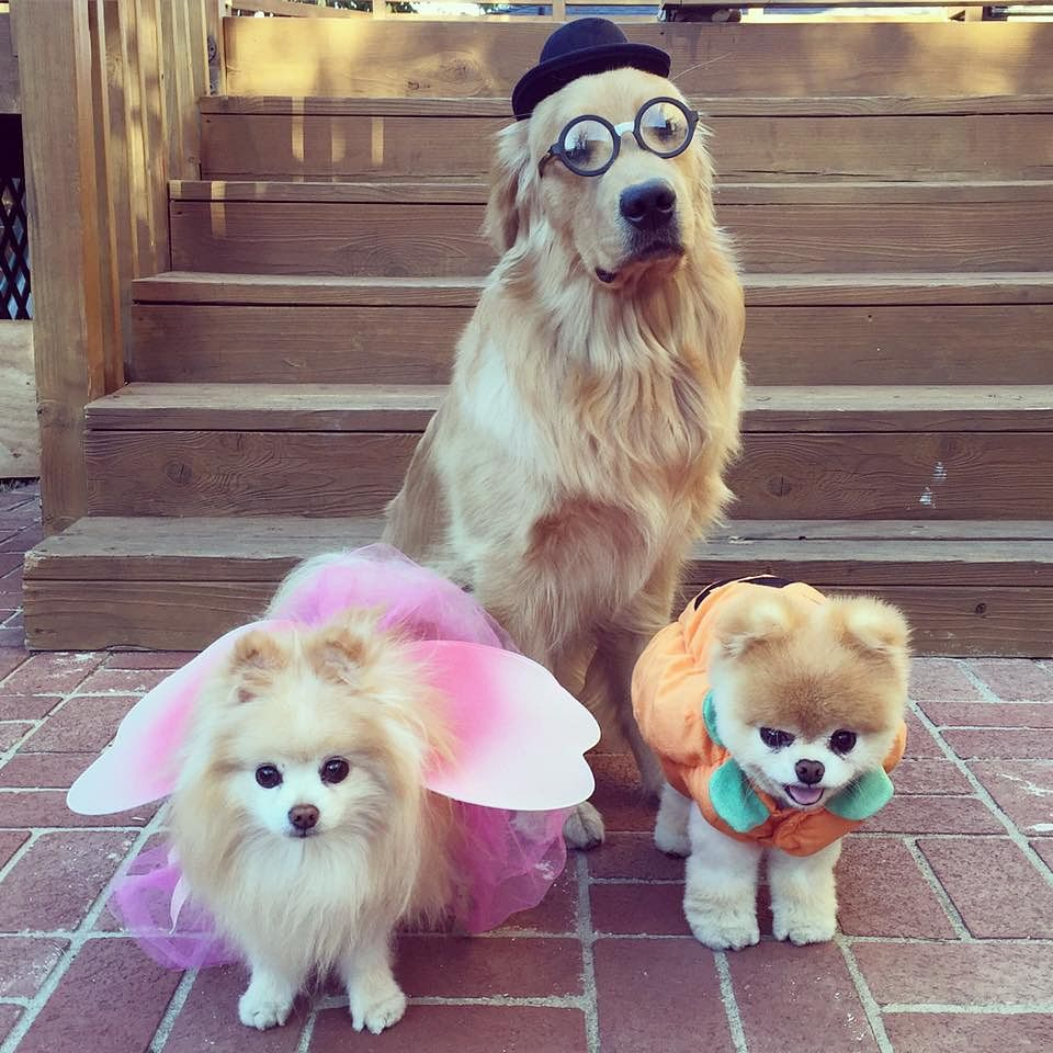 Happy Halloween from the haughty gentleman, the cranky fairy, and the chubby pumpkin!