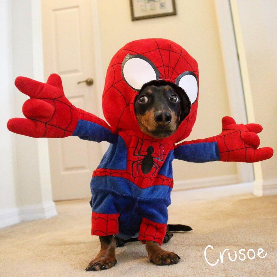 Wassup? I'm Spiderweenie!