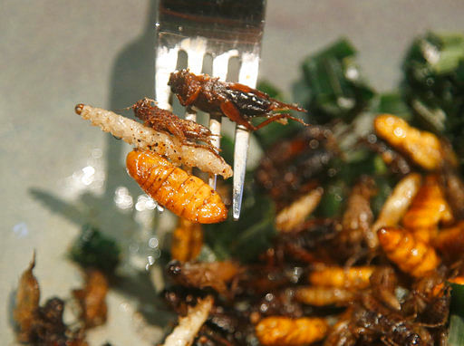 A bamboo worm, silkworm and fried crickets are displayed on a fork before being eaten at Insects in the Backyard restaurant, in Bangkok, Thailand.