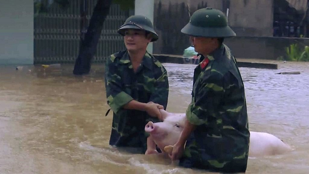 Two soldiers walk a pig through flood water in northern province of Thanh Hoa, Vietnam.