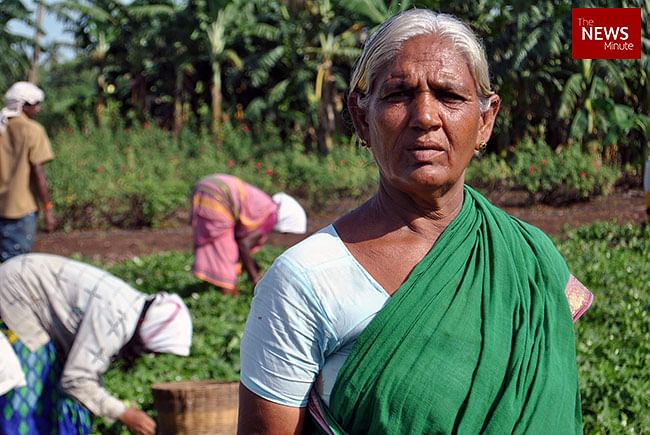 Raghavamma, who earns Rs 600 per day as a farm labour supervisor worries how she'll raise three grandchildren on the Rs 2,500 pension for landless labourers