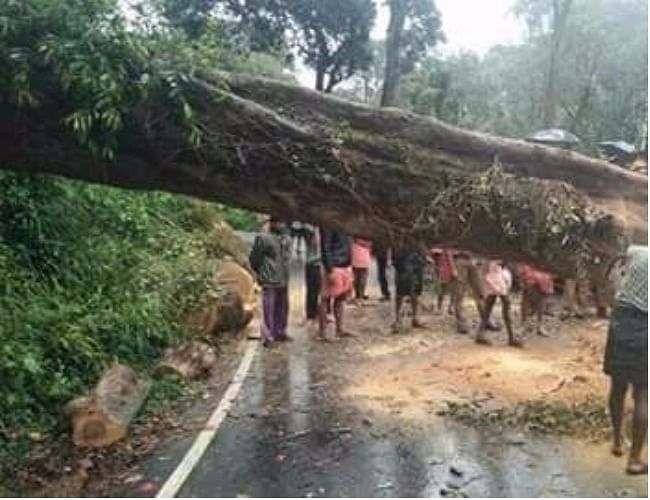 A huge tree fell in Kollam in Kerala