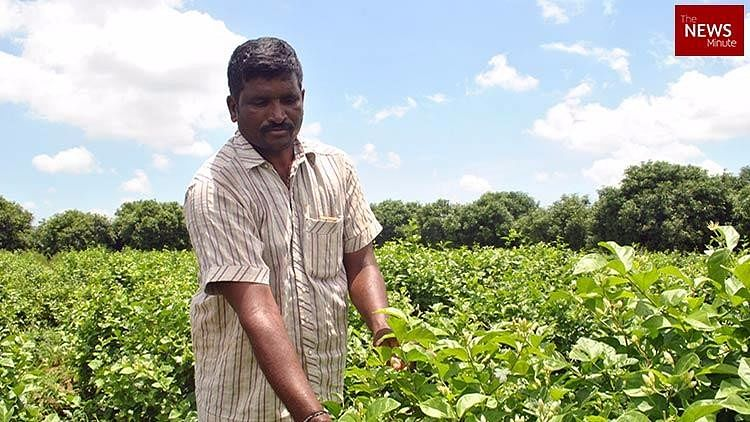 Making of Amaravati: Andhra Farmers Pay the Price for 'Dream City'