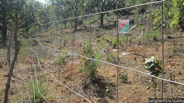 Forest land fenced off for compensatory afforestation in Kandhamal district, Odisha.
