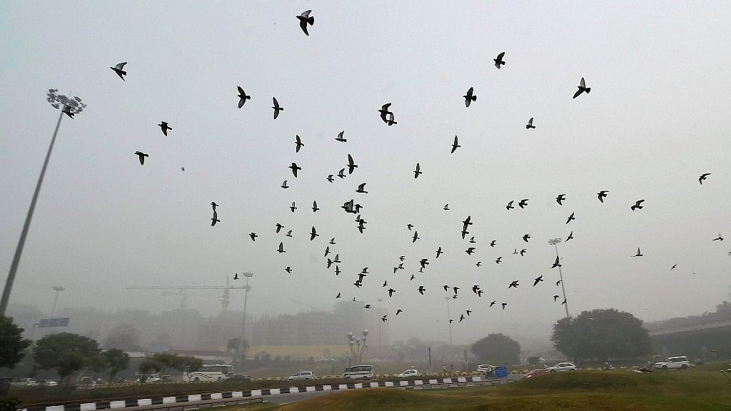 Birds fly amid smog near AIIMS in New Delhi on Wednesday.