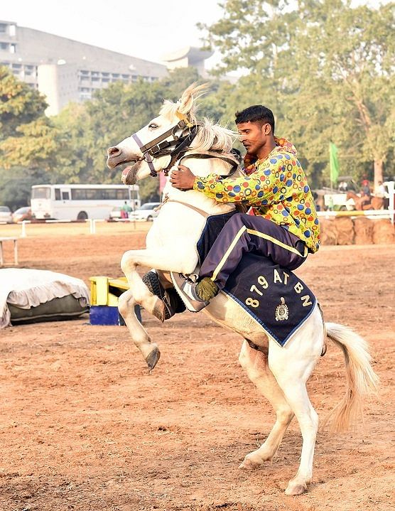 Deputy Commissioner of Police G Saravanan said that in the 218-year history of the force, for the first time 21 horses were inducted into service at one go. Representative image only.