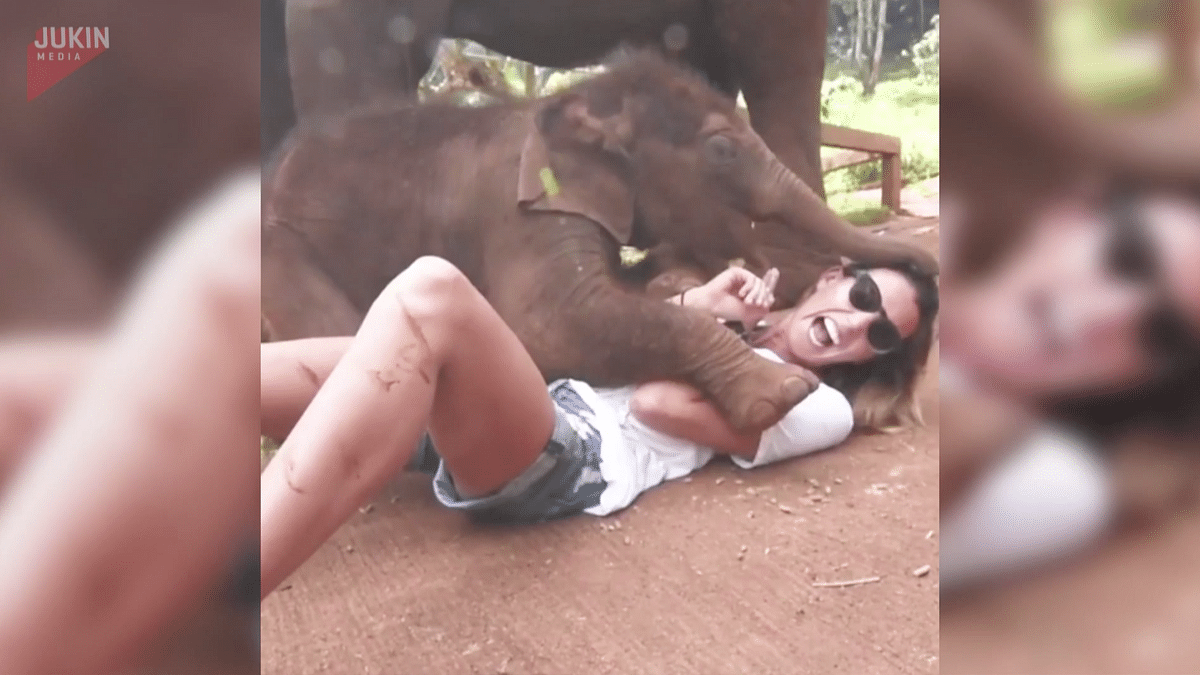 Cuteness Personified: Baby Elephant Can't Stop Cuddling This Woman