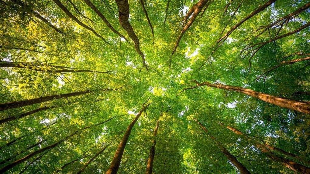 'Garden City' Bengaluru Has Merely 3% Green Cover, Says Survey