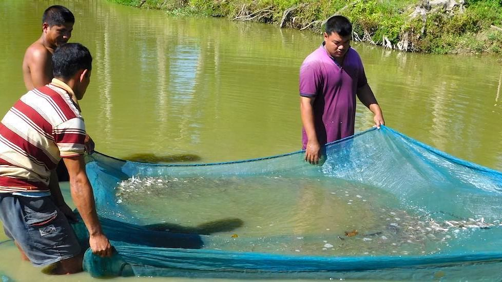 Producing fish seeds provides a sustainable livelihood to unemployed youth in Assam.