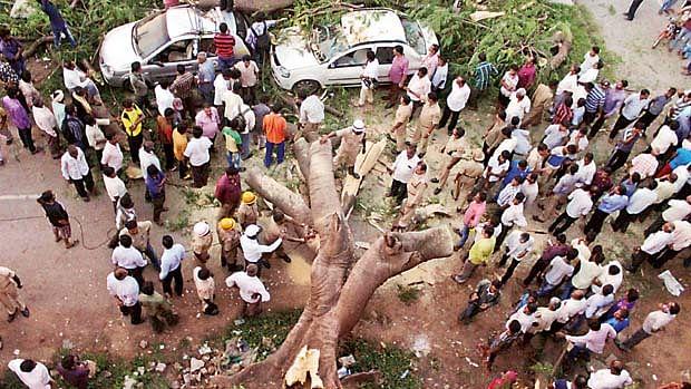 QMumbai: Tree Fall Kills Man; Partner of Parsi Dairy Farm Held