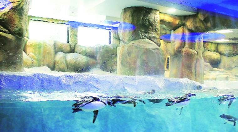 The penguin enclosure at the Byculla Zoo. (Photo Courtesy: Facebook)