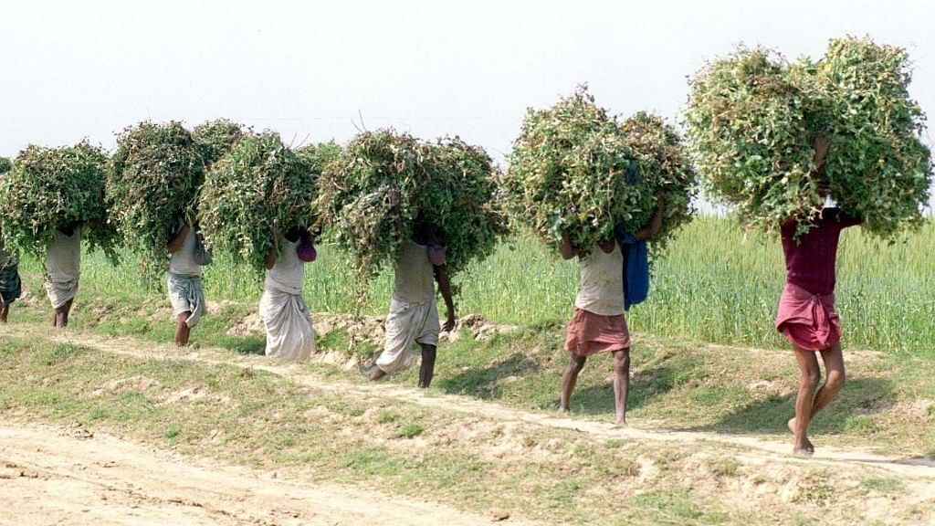Representational image of Indian farmers.