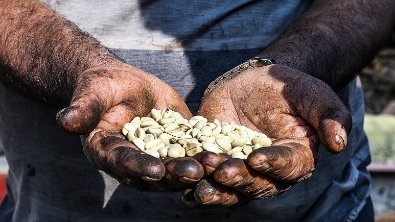 Can Nepali Coffee Survive Impacts of Climate Change?