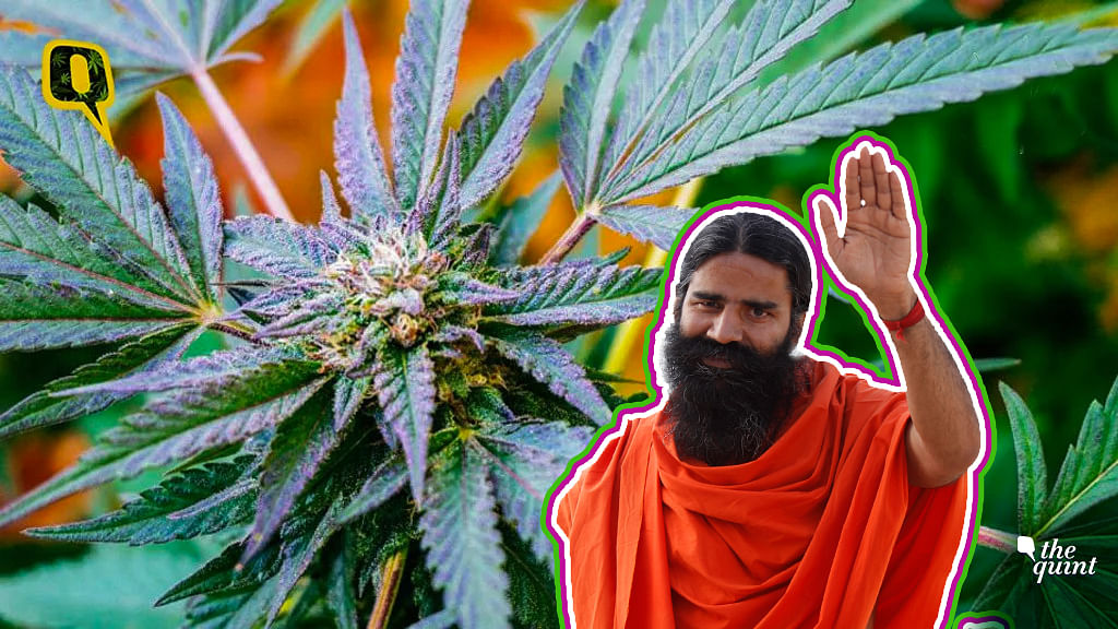 Patanjali CEO wants Marijuana to be legalised in India.