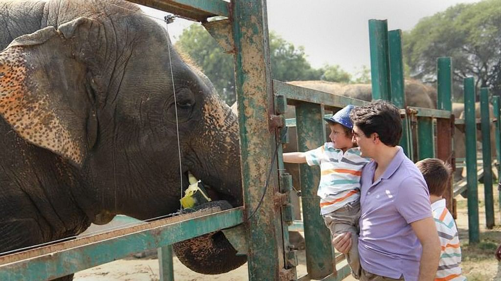 Watch: Trudeau Family Feed Jumbos, Call to Conserve the Species